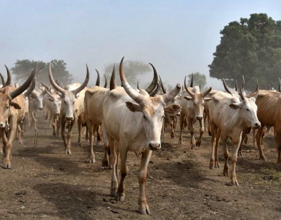 Mundari Sudan Południowy 2021