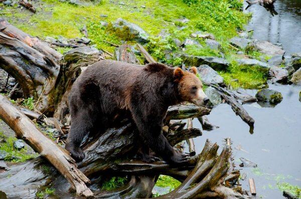 Alaska wycieczka Alaska wyjazd