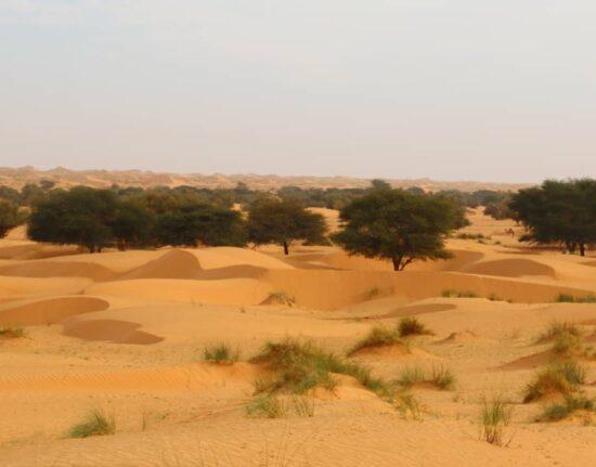 Sahara Pustynia Adrar