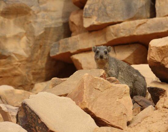 Pustynia Adrar w Mauretanii
