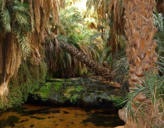 oaza w Mauretanii