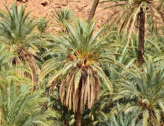 Oaza Libia Sahara