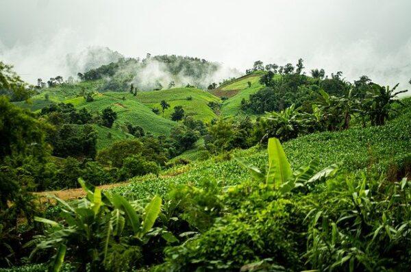 Ruwenzori Trekking Uganda