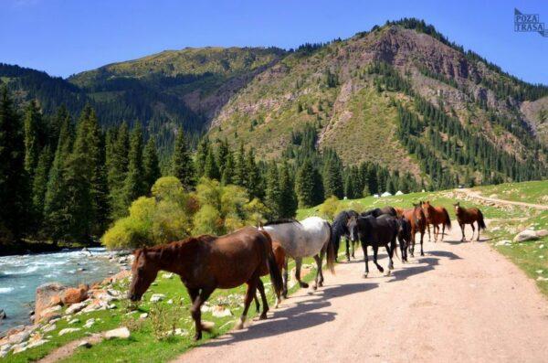 Podróż przez Kirgistan