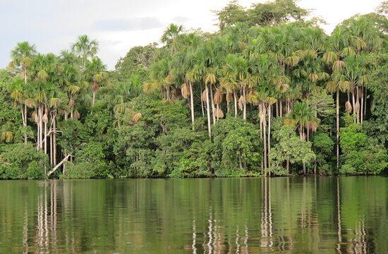Amazonia Kolumbia