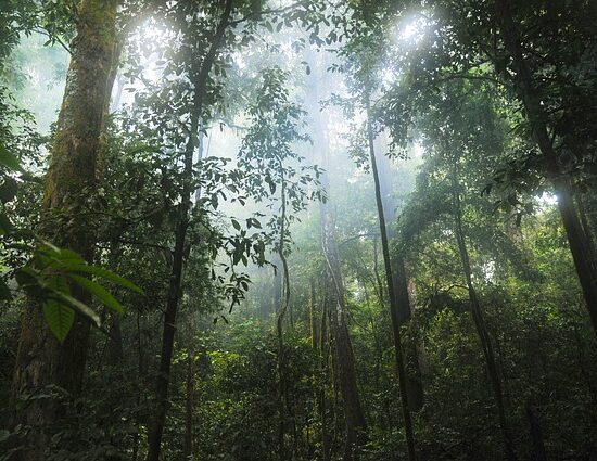 lasy deszczowe Amazonii w Kolumbii
