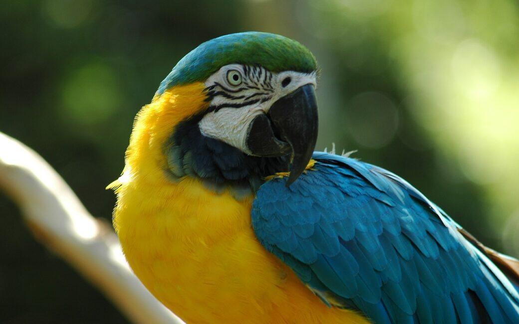 Amazonia Kolumbia Leticia