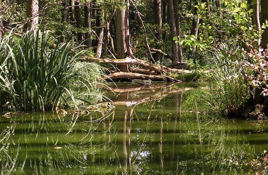 rejs po Amazonce w Kolumbii